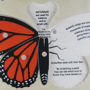 Monarch nomenclature with words