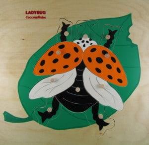 ladybug yellow