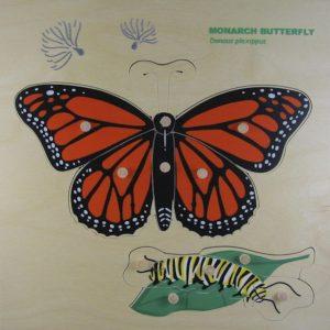 monarch nomenclature