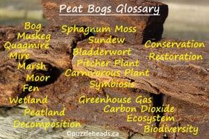 glossary-peat-bales-260014