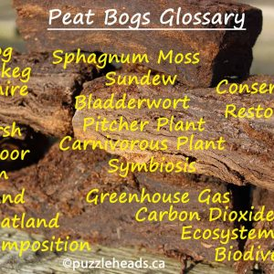 Peat Bogs and Marshes Glossary