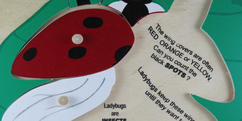 ladybug-detail1