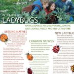 ladybug-fieldguide-poster-11x17