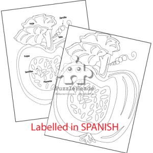 Pumpkin-Control-charts-for-website-Spanish