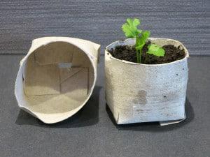 toilet-roll-pots