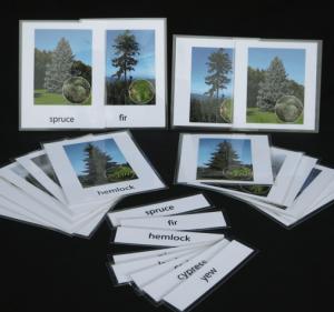 Conifer nomenclature cards.