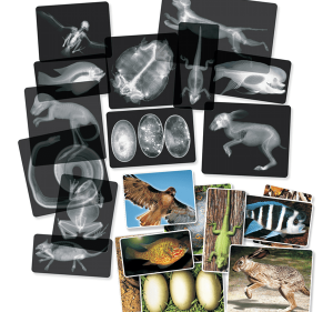 Animal x-rays kit samples.