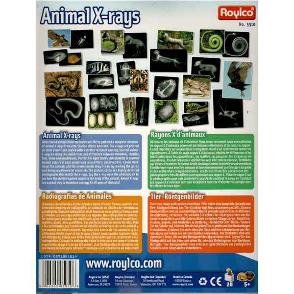 Roylco animal x-rays kit package back.
