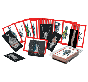 Insect x-rays set of 72 cards.