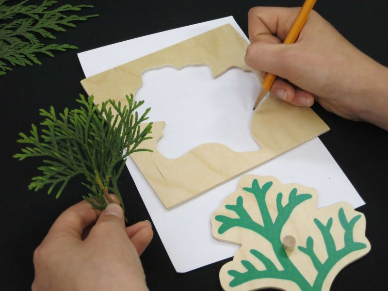 Conifer Cabinet Evergreen Leaf Shapes