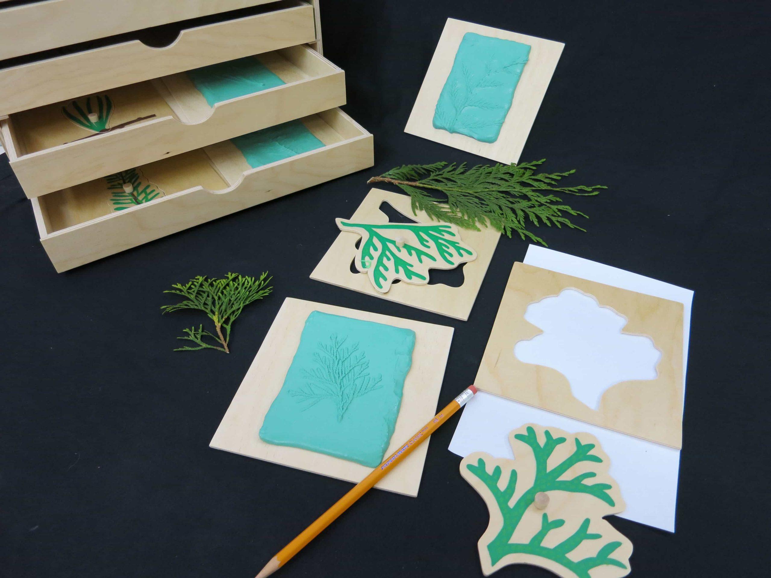 Conifer Cabinet Evergreen Leaf Shapes