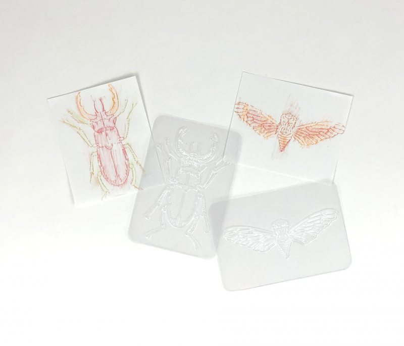 Insect rubbing plates for 16 common insect species.