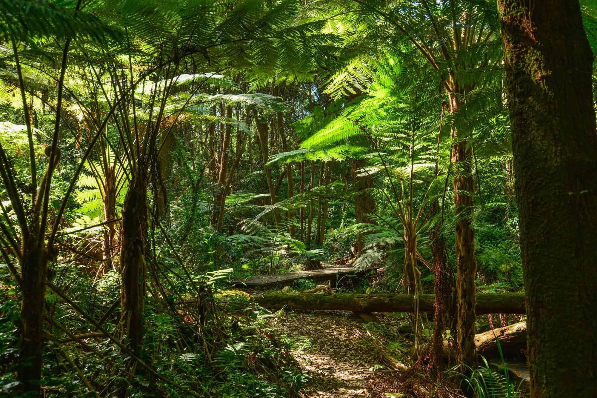 Temperate rainforest.