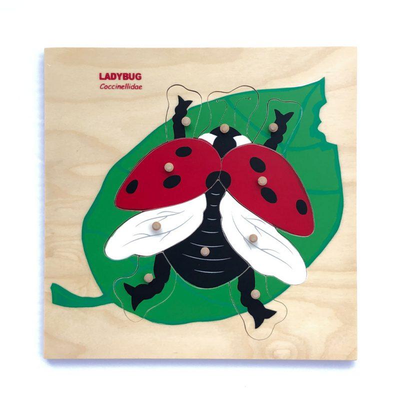 Wooden red ladybug puzzle.