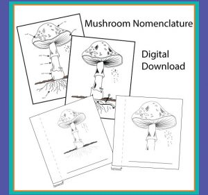 Mushroom nomenclature digital bundle.