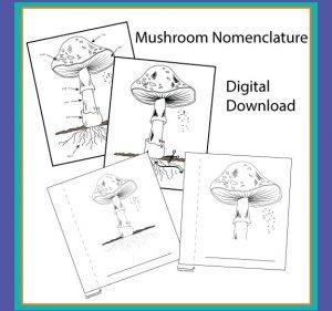 Mushroom nomenclature digital bundle.