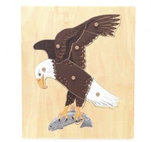 Bald eagle nomenclature puzzle.