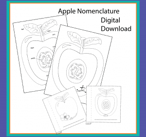 Cover image for Apple nomenclature digital downloads.